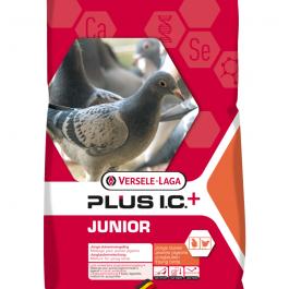 Junior IC