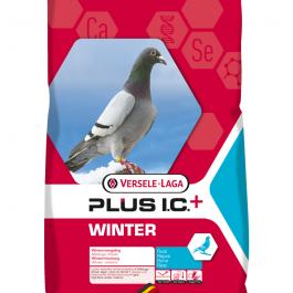 Winter IC